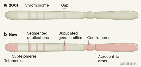 突破人类参考基因组的未知数
