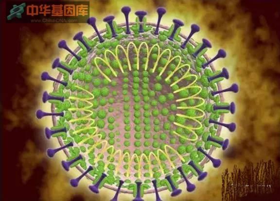 不要怕,冠状病毒答案在这里!